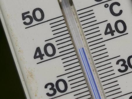 Sommerhitze und Katzen, diese Tipps bringen Abkühlung