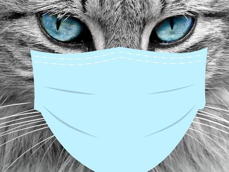 Die Katze & das Corona-Virus (Covid-19)
