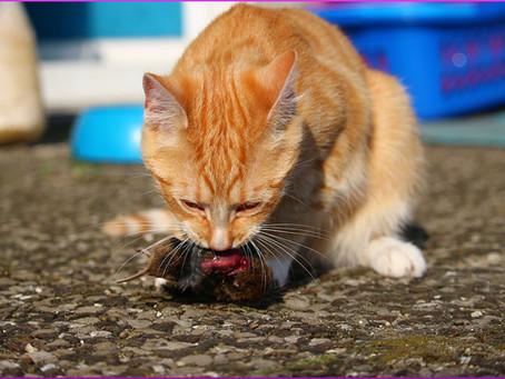 Katzen Ernährung - Die Grundlagen