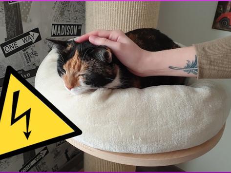 Die Katze lädt sich beim Streicheln statisch auf - Was tun?
