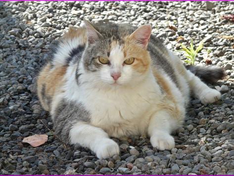 Übergewicht bei Katzen & wie man es in den Griff bekommt