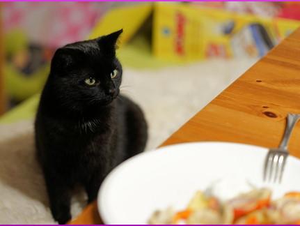Lebensmittel, die für Katzen gesundheitsgefährdend sind