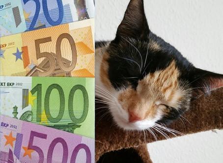 So kann man bei Online-Einkäufen für die Katze Geld sparen