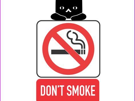 Katze im Raucherhaushalt; so gefährlich ist das passive Rauchen für euer Haustier