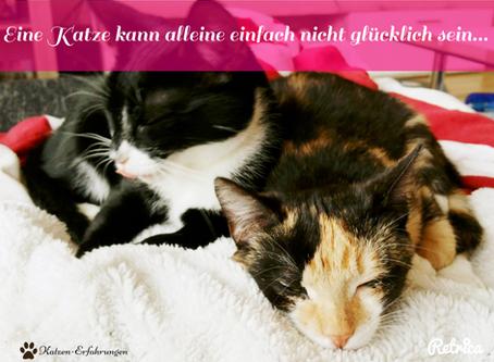 Einzel-oder Mehrkatzenhaushalt?