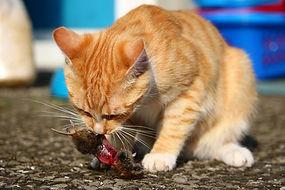 Ratgeber rund um Ernährung für Katzen