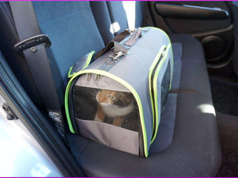 Die Katze und ihre (meist gehasste) Transportbox