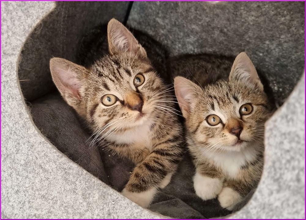 giardien bei katzen naturlich behandeln