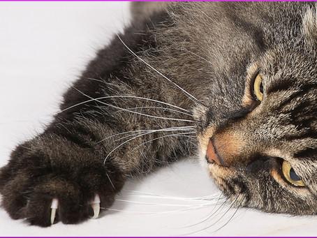 Ist das Krallenschneiden bei Katzen notwendig?