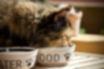 cat-3474821_1280.jpg