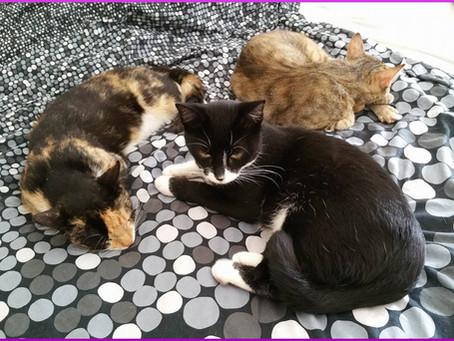 Die Zusammenführung von Katzen