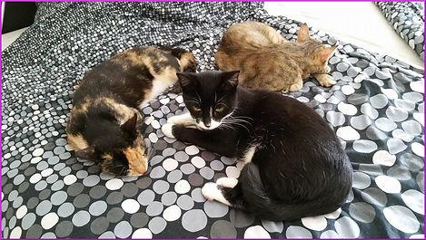 Zusammenführung Katzen
