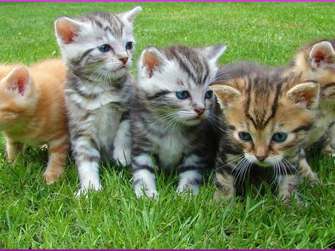 Die beliebtesten Namen für Katzen und Kater