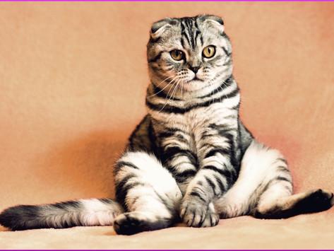 Wurmkur bei Katzen; Befall erkennen und richtig behandeln