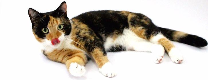 Artgerechte Ernährung Katze