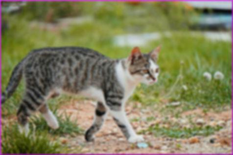 kitten-1702568_1920.jpg