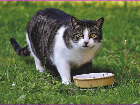 Darum scharrt die Katze neben ihrem Futternapf