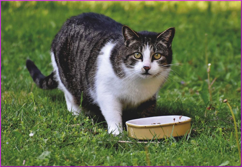 Aufpäppeln säugende katze Keine Katze