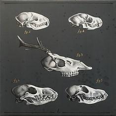 Delphyne V., art, artiste, artiste française, peinture, acrylique, paris, surréalisme, lowbrow, pop surréalisme, contemporain, moderne, galerie, os, squelette, bestiaire, sacré, alchimie, pagan, sorcière, crâne, biodiversité, préservation, funny bones, anatomie, planche anatomique, crâne animaux, noir, blanc, doré