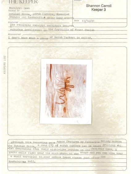Eucalypt Dawn Log. Jpeg.jpeg