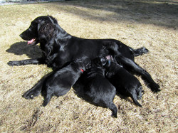 Mar 21 mom and pups