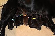 8 pups day 1.jpg