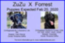 zuzu forrest ad Large Web view.jpg