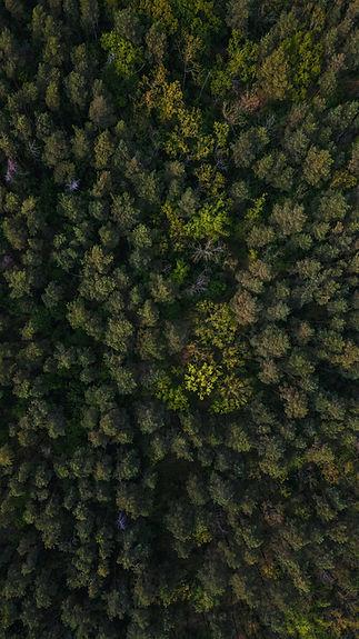 ROF green forest.jpg
