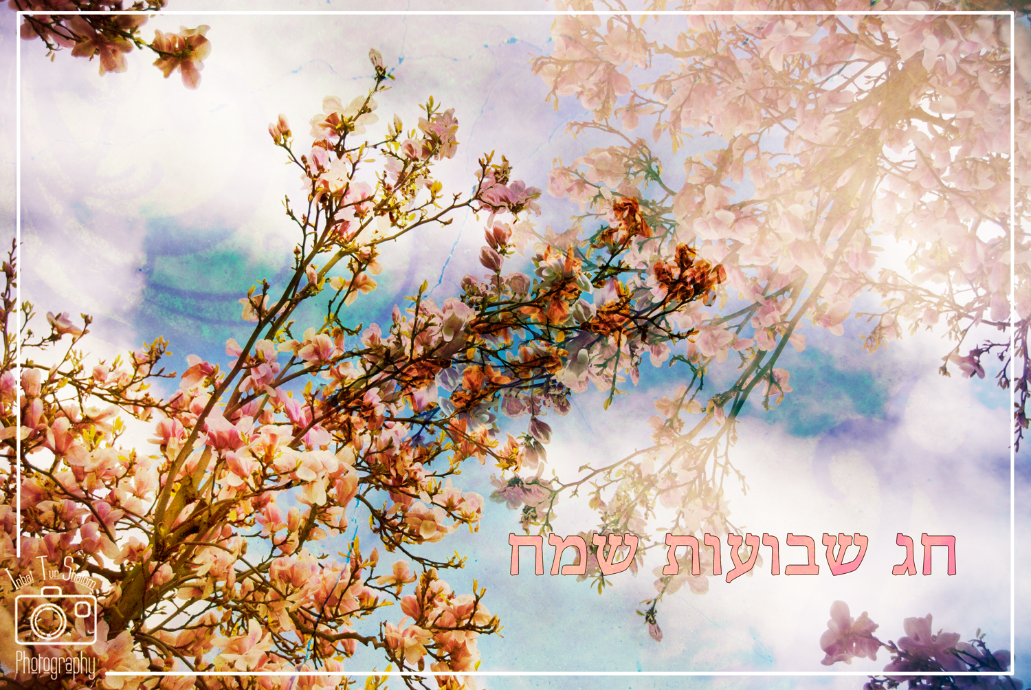 Shavuot-Greeting-Card