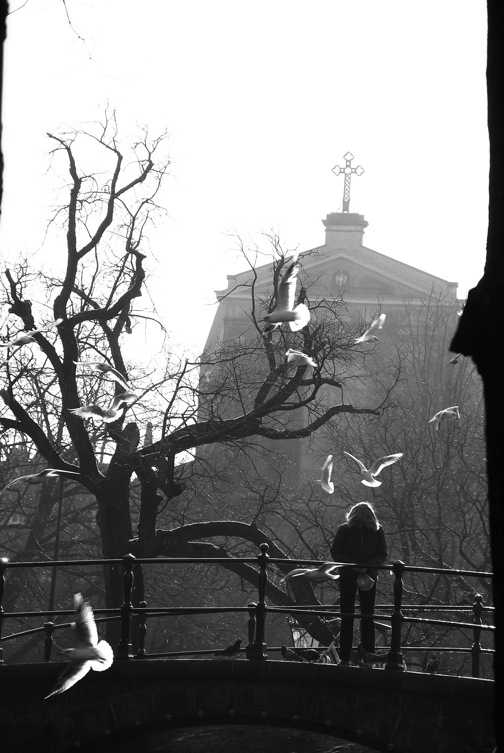 Lady feeds the seagulls near Amstel Church