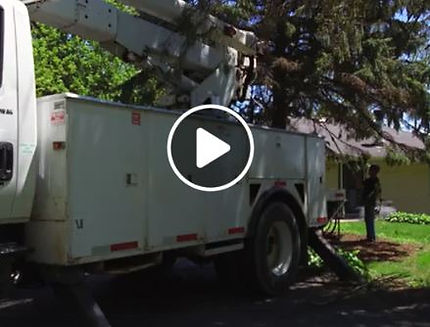 trees,removal,services,wi,united,states,landscaper,landscaping,service,storms,storm,racine,milwaukee,madison,double,k