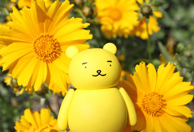 黄色いお花と一緒に日光浴の黄ぐまくん