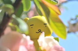春の黄ぐまくん