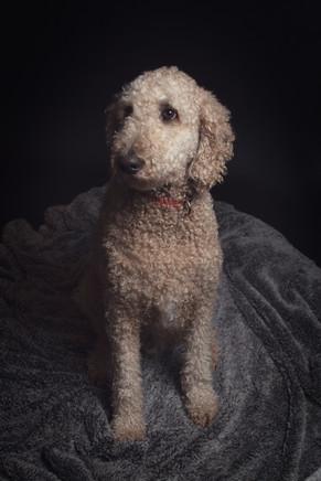 Pet Portrait BB