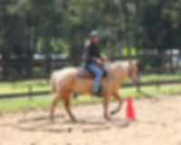 Green horse Training