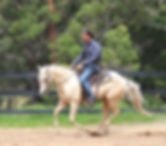 Young horse Training