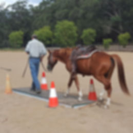 Training Horse over Bridge