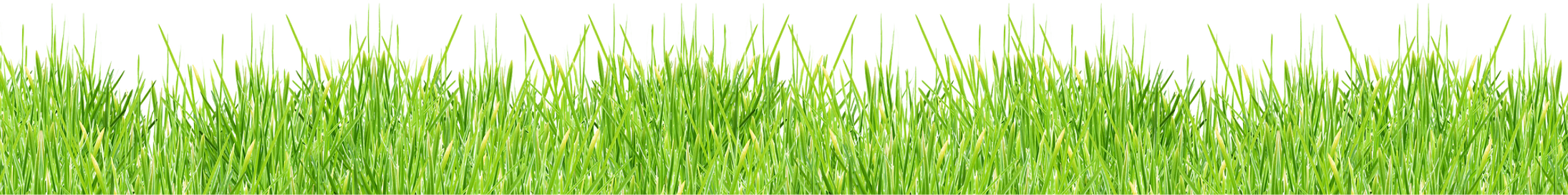 grass_PNG393.png
