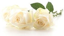 biała-roża_1339-1267.jpg