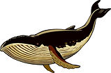 Baby-whale-clip-art-free-clipart-images-