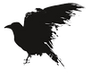 204-2049201_crows-vector-game-thrones-raven-silhouette-raven-silhouette_edited_edited.png