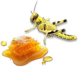 locust-honey.jpg