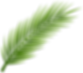 palm-tree-leaf-11532873212izjqb9a8ah.png