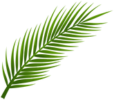 palm-tree-leaf-11532873212izjqb9a8ah.png