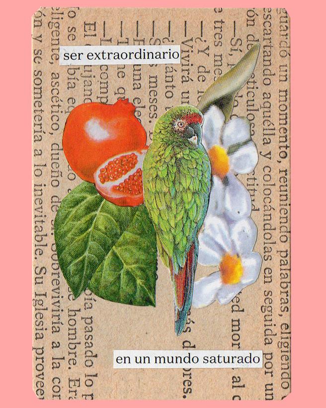 Carta Loro - Ojitos Multicolor