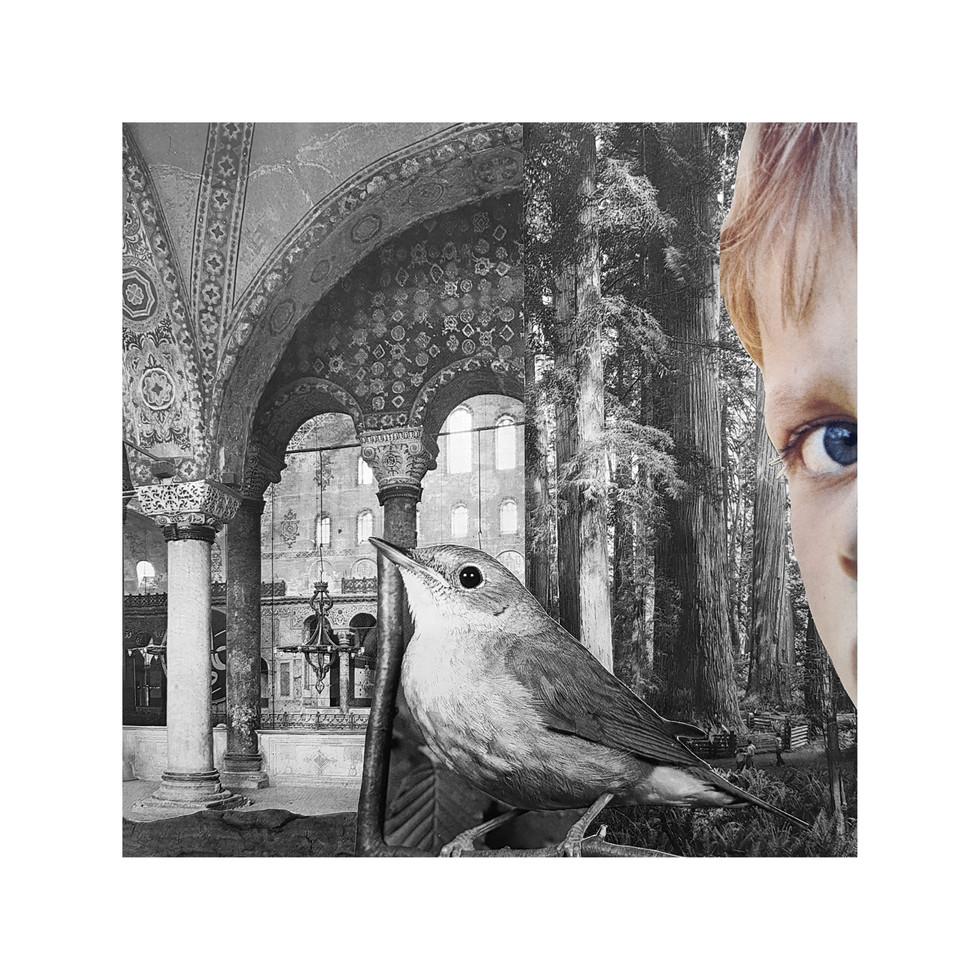 TitoBN - El Recreo Collage