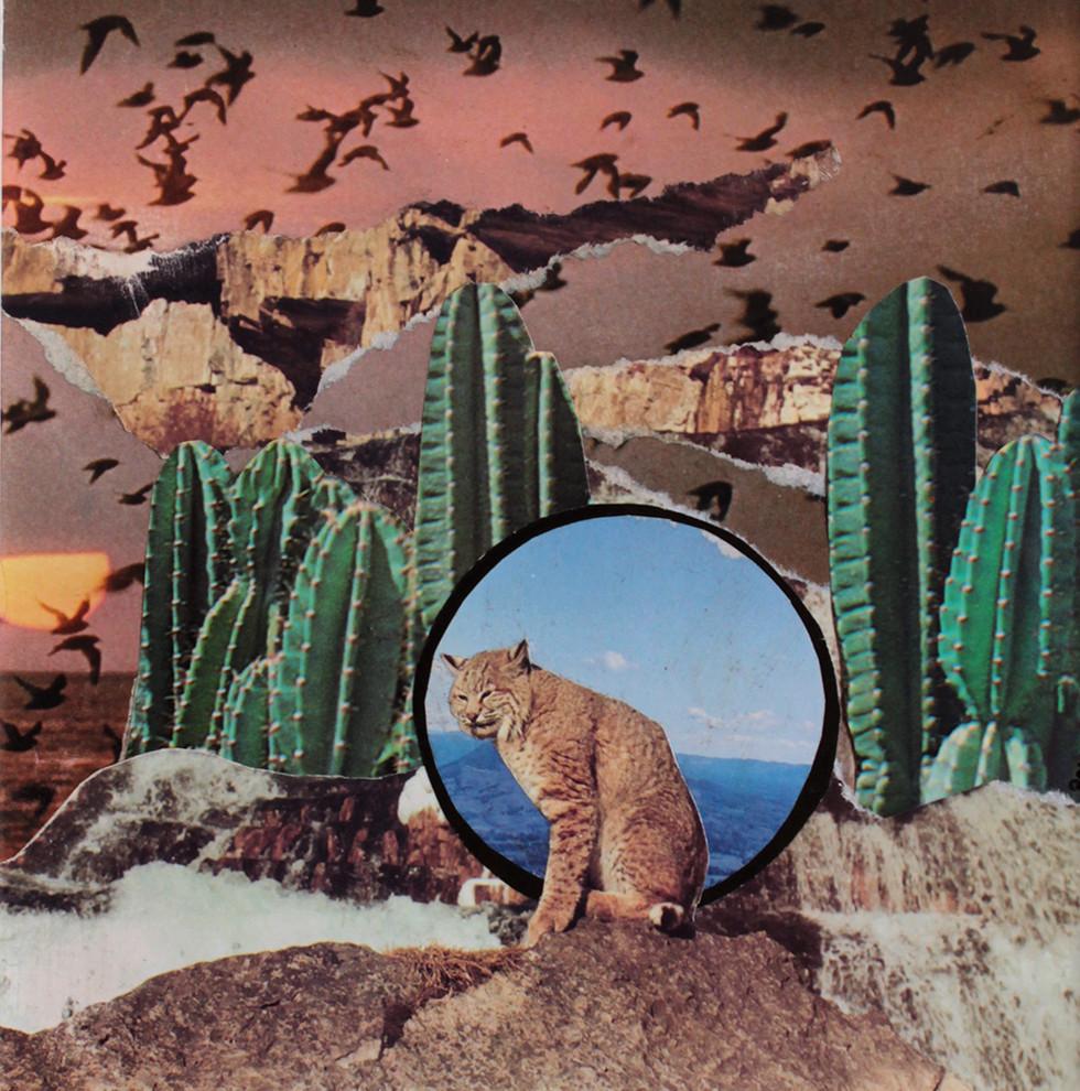 Lince en el desierto - Pau collage