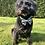 Thumbnail: Happy Sheep classic bow tie