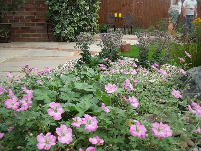 Modern-cottage-garden-13-quercus-garden-