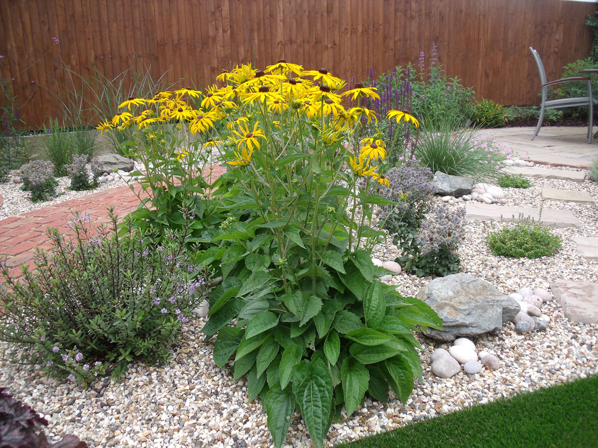 Modern-cottage-garden-14-quercus-garden-